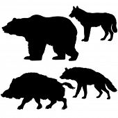 vector silhouettes of the wild boar, bear, wolf, hyena on white background