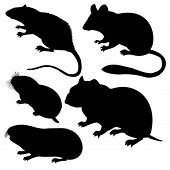 vector silhouettes rodent on white background