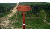 Signpost For Vineyard Route