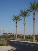 Palms And Clubhouse