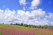 lila Blumen auf Feld