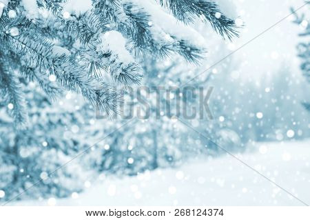 Bright Winter Landscape With Snowcovered