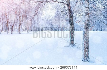 poster of Winter landscape - frosty trees in winter forest in the sunny morning. Winter landscape with snowy winter trees. Tranquil winter forest nature in soft morning sunlight