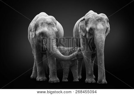 Group Of African Elephants Mum