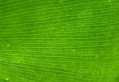 Palm Leaf Background