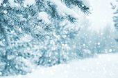 Bright Winter Landscape With Snow-covered Pine Trees. Winter Background. poster