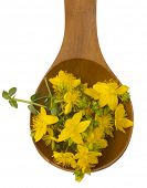 St. John's wort in the wooden spoon isolated