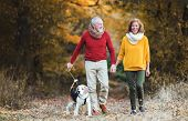A Senior Couple With A Dog On A Walk In An Autumn Nature. poster