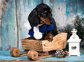 Christmas dog dachshund poster