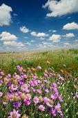 Paisaje de verano hermoso cielo y flores silvestres