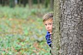 Each Day Holds A Surprise. Small Boy Hide Behind Tree. Small Boy Playing Peekaboo Game In Forest. Wh poster