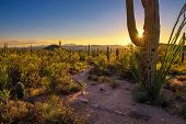 Sunset Over Hiking Trail And Cactuses In Saguaro National Park Near Tucson, Arizona poster