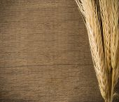 ears spike on wood texture background