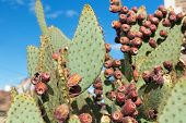nature, botany and floral concept - close up of cactus growing outdoors over blue sky poster