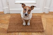 stock photo of guest-house  - dog welcome home on brown mat and door - JPG