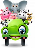cute animal on green car