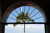 stock photo of malecon  - Palm Tree and Arch Window from a resturant on the Malecon in old town Puerto Vallarta Mexico - JPG