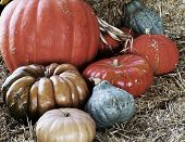 Closeup 0 F Eight Pumpkins