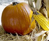 Close-Up Of Pumpkin And Corn