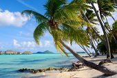Palms in Bora Bora.