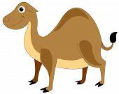 hübsch braun Kamel, Abbildung