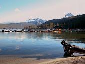 stock photo of redfish  - Idaho - JPG