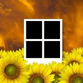 4 Blank Photo Frame On Beautiful Yellow Sunflower Petals Closeup