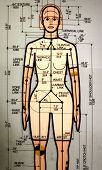 stock photo of osha  - female crash dummy drawing - JPG
