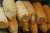 close view of homegrown corn