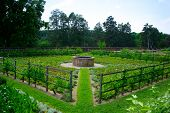 Vegetable Garden At Mount Vernon