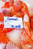 Black belly rose fish in the fishmarket