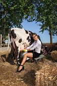 picture of milkmaid  - Business woman with laptop milking cow on farm - JPG