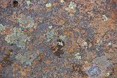 image of lichenes  - Details brightly colored lichen on volcanic boulder Diamond Craters Outstanding Natural Area Malheur Oregon - JPG