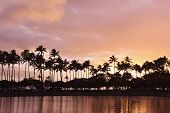 Hawaiian sunset pink