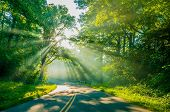 stock photo of paved road  - Road through forest with light beams and sun rays through green trees - JPG
