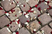 Leaves Of Roses At The Floor