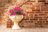 image of petunia  - close up shot of some beautiful petunia flowers over a brown brick wall - JPG