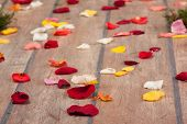Petals Of The Roses On  Floor