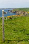 Pembrokeshire coast path towards Newgale and Rickets Head St Brides Bay Wales from Nolton Haven