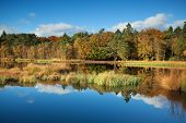 Gold Autumn Forest Reflected In Lake