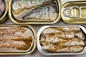 Tins of sardines and mackerel in different sizes open isolated on a white background
