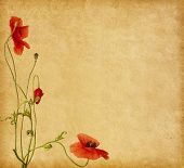 paper textures with poppies