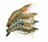raw tiger shrimps on white background