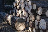 Wooden Harrow