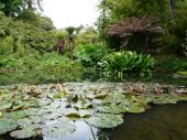 Tropical gardens at Heligan