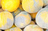 Group Of Yellow Water Melons Sold At Market