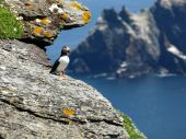 puffin skellig island landscape view