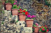 Flowers In The Pots, Vintage Look