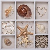 Seashells on sand in a white box