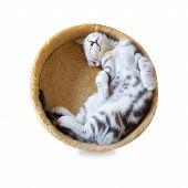 A Cat Sleep In The Bucket